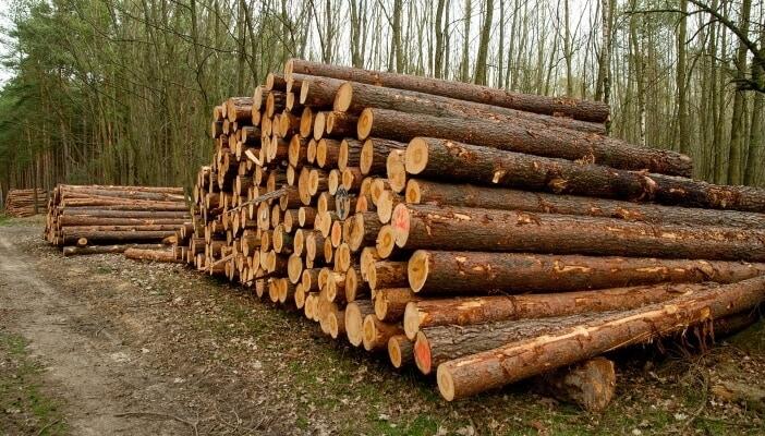 Nadelholz ist ideal geeignet für den Bau von Holzhäusern